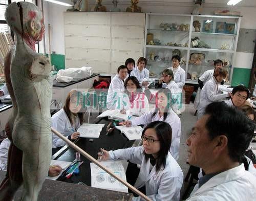 中医学开设有哪些课程