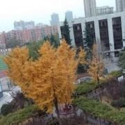郑州财贸学校