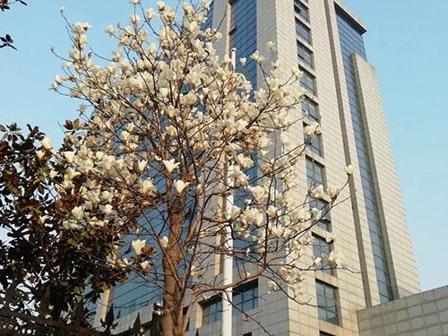 江苏汽车技师学院2021年有哪些专业